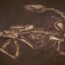 10 окаменелостей динозавров, хорошо сохранившихся до наших дней