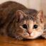 Почему кошки так любят «раскачиваться» перед прыжком?