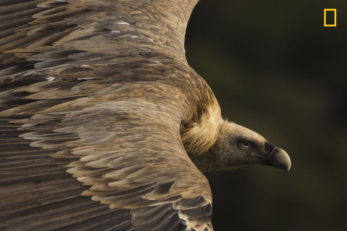 1-е место в категории «Природа». Фотограф Tamara Blazquez Haik
