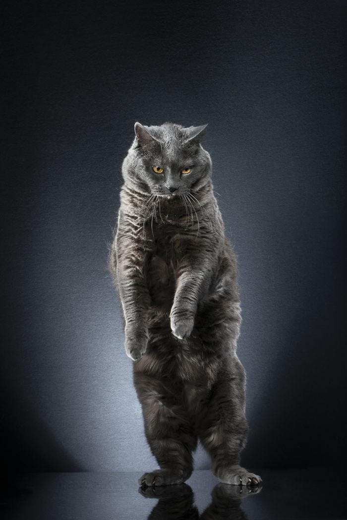 Как на подиуме: чудесные портреты котов в объективе Алексиса Рейно