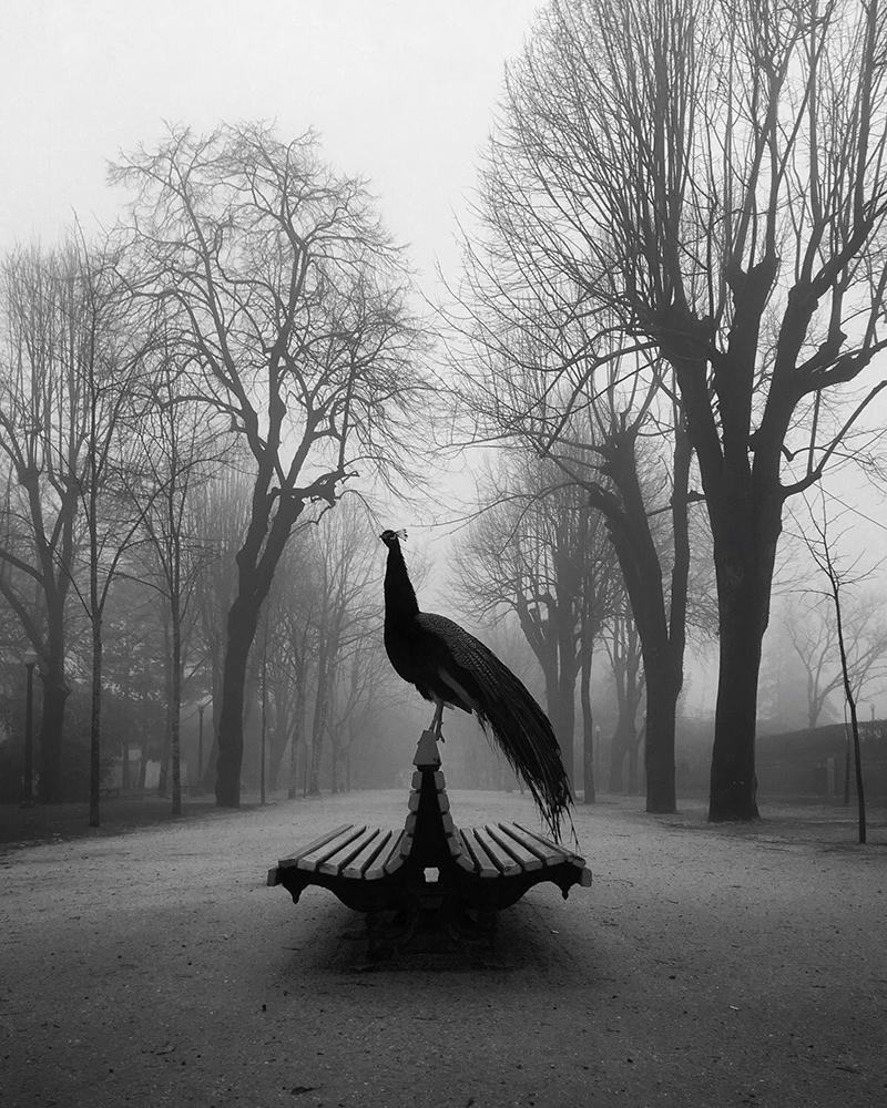 1-е место в категории «Животные». Фотограф Diogo Lage