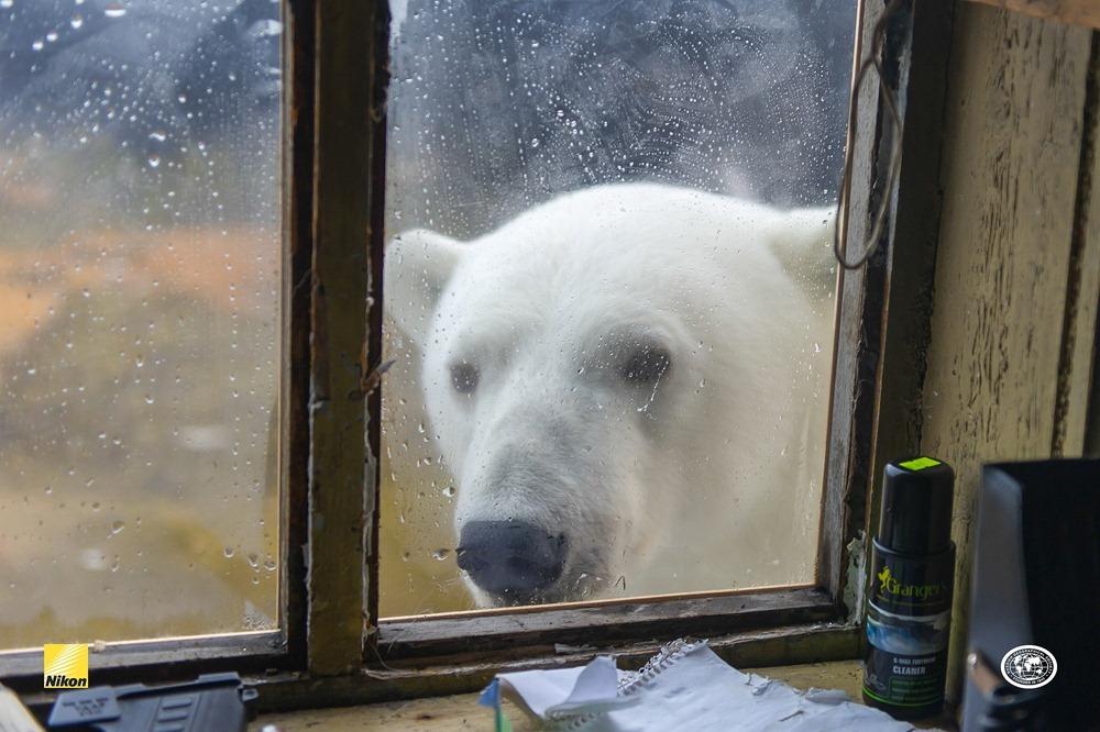 Удивительный Остров Врангеля: любимое место белых медведей и последний оплот мамонтов
