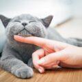 Как правильно гладить кошку, согласно науке