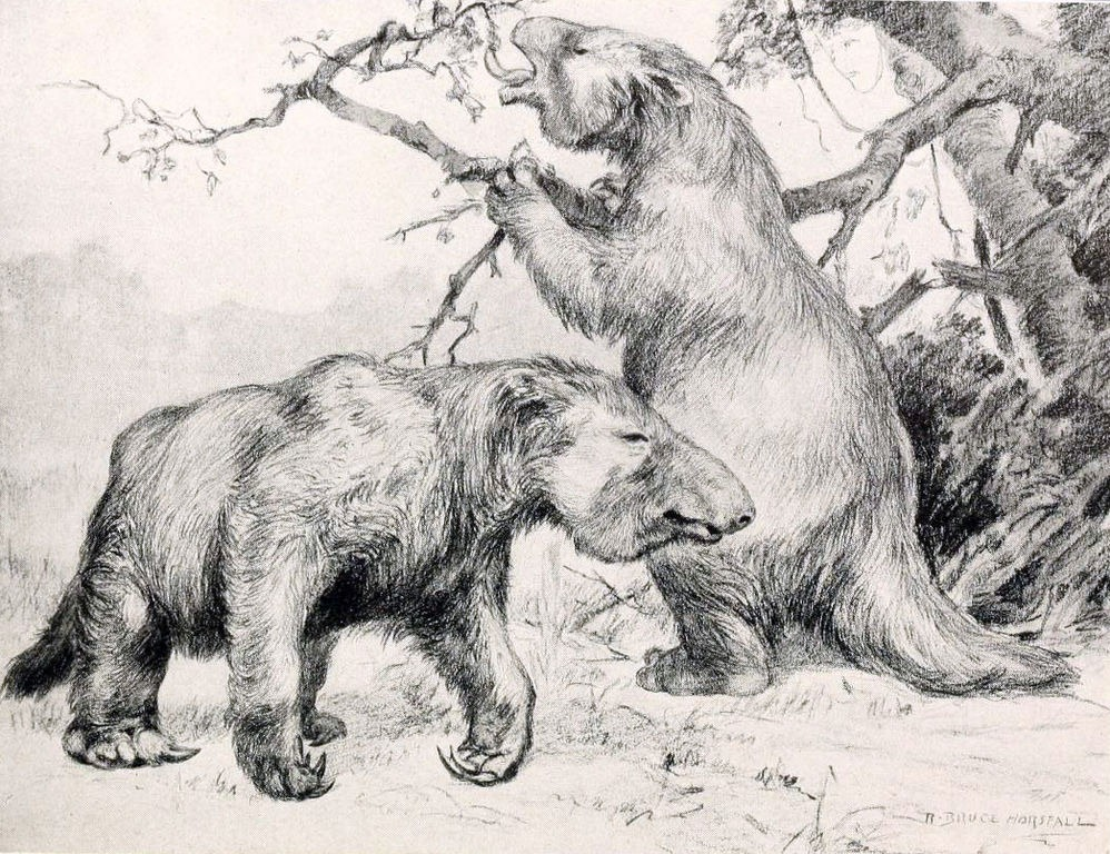 Мегатерии — вымерший род гигантских ленивцев