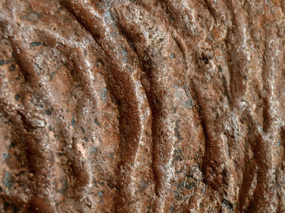 Доисторические мега-норы, которые были вырыты гигантскими ленивцами