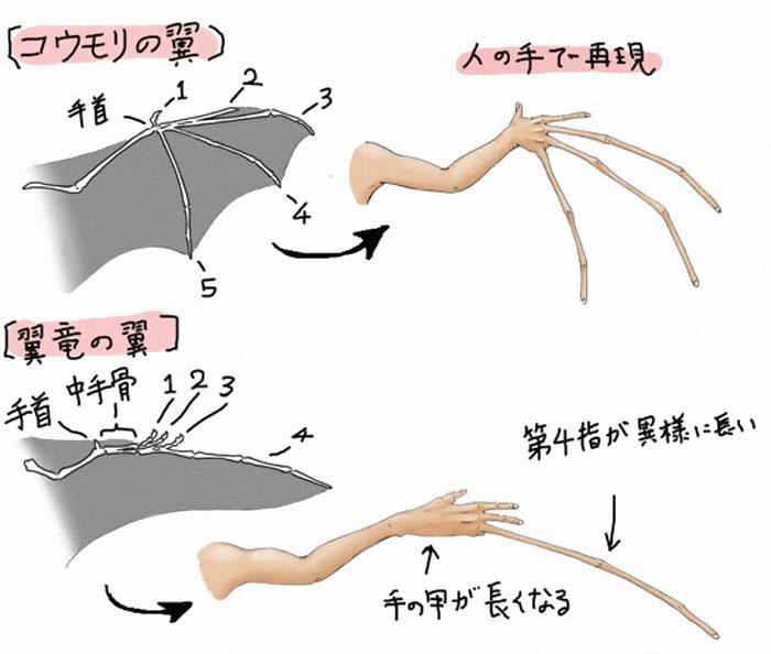 Разница между крыльями летучих мышей и вымерших птерозавров