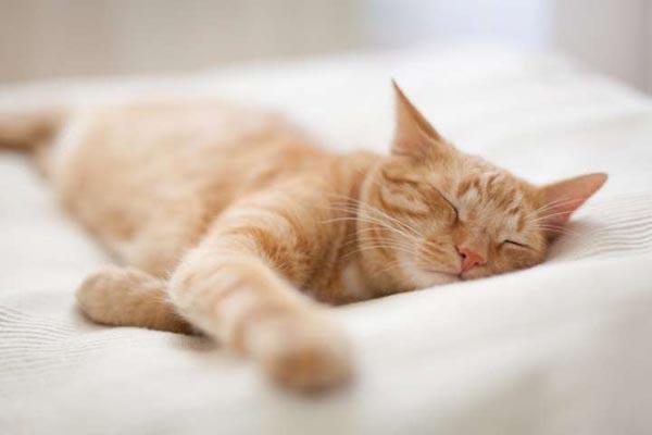 Почему кошки так любят спать? С точки зрения науки