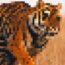 Количество пикселей на этих фотографиях отражают количество оставшихся особей вымирающих видов