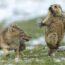 Победители престижного конкурса фотографии дикой природы «WPY 2019»