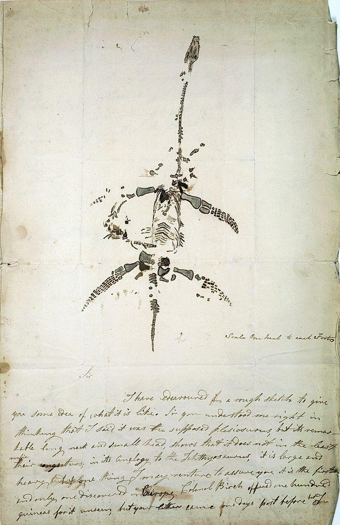 Письмо и иллюстрация от Мэри Эннинг, объявляющие об обнаружении ископаемого животного, теперь известного как плезиозавр