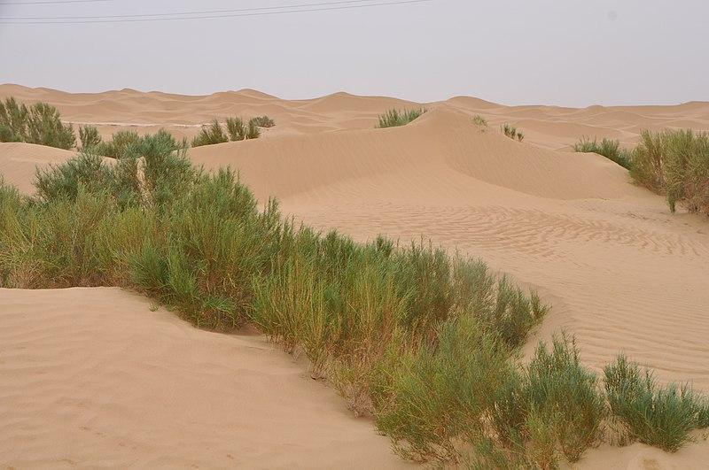 Зелёная полоса вдоль самого длинного пустынного шоссе в мире