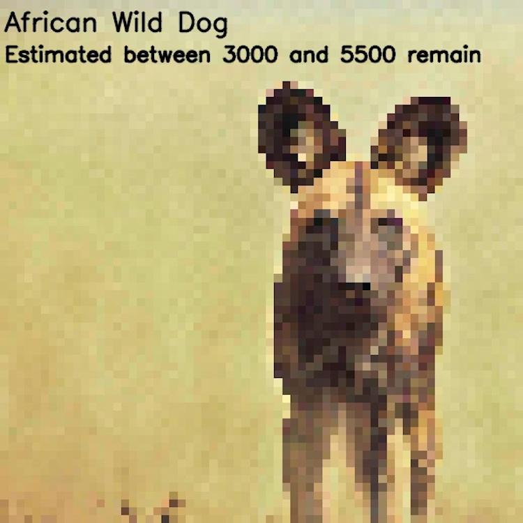 Гиеновидная собака, ≈ 3000-5500 особей