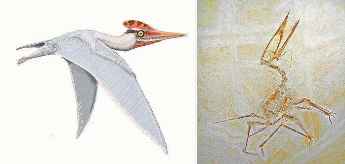 Вымершие летающие монстры, правившие небесами доисторической Земли