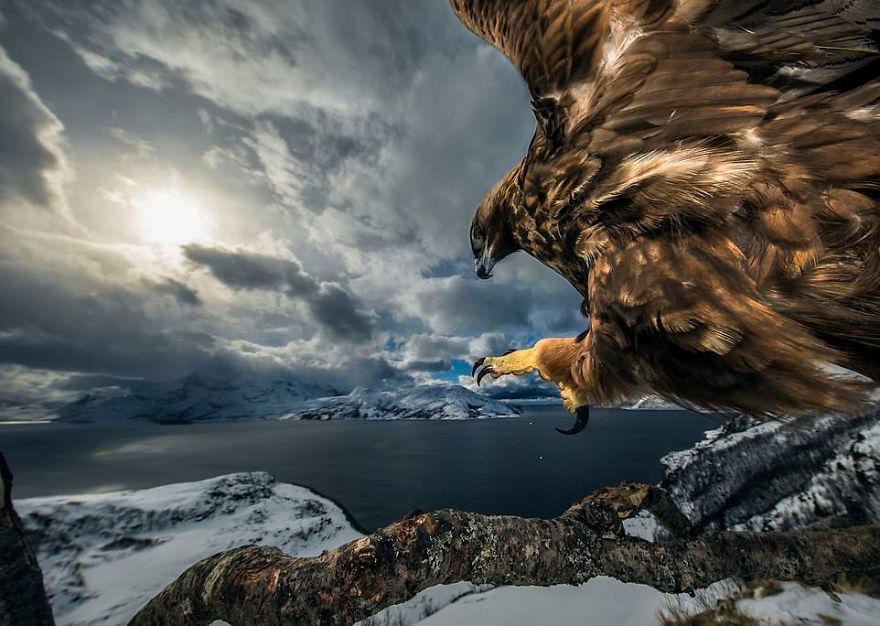 Победитель в категории «Поведение: птицы». Фотограф Audun Rikardsen