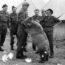 Необычная история Войтека — медведя, который прошёл войну (ещё он очень любил пиво)