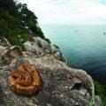 Бразильский остров ядовитых змей Кеймада-Гранди - место вашего кошмара