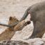 Смешные дикие животные: победители конкурса фотографии CWPA 2019