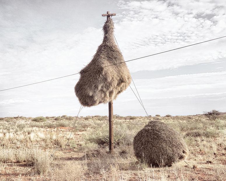 Массивные птичьи гнезда, служащие крепостью и домом для множества видов птиц