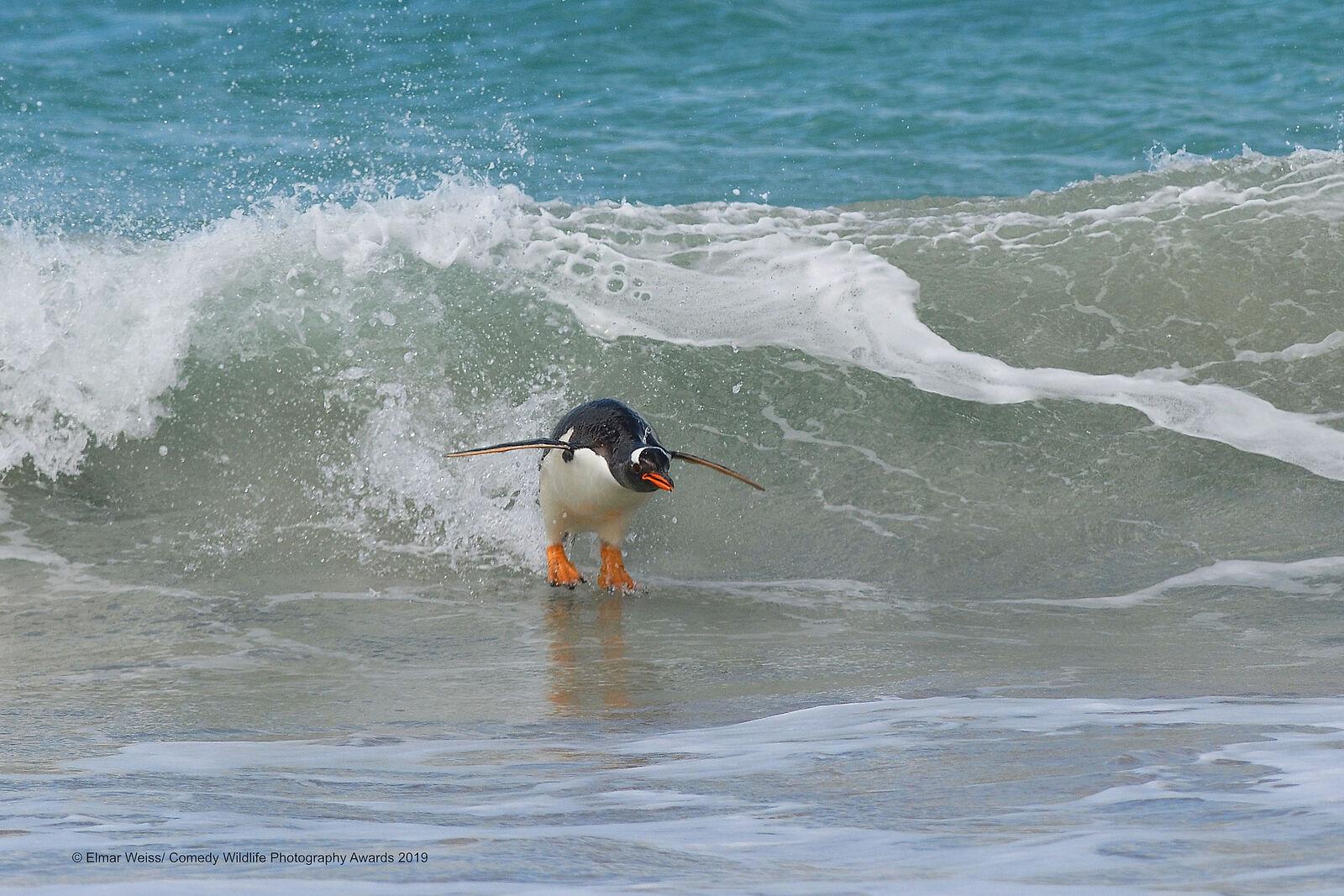 «Сёрфинг. Южноатлантический стиль». Фотограф Elmar Weiss