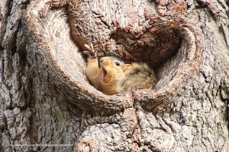 «Кто хочет арахис?». Фотограф Corey Seeman
