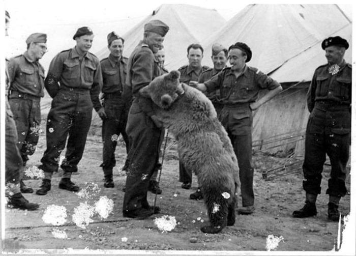 Необычная история Войтека - медведя, который прошёл войну (ещё он очень любил пиво)