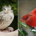 20 видов птиц, которые, будучи птенцами, выглядят совсем иначе