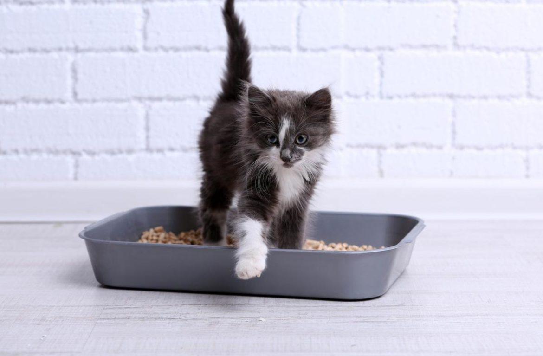 Почему кошки всегда стремятся зарыть свои экскременты?