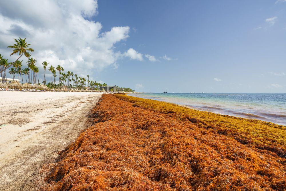 Саргассово море - единственное в мире море, не имеющее берегов