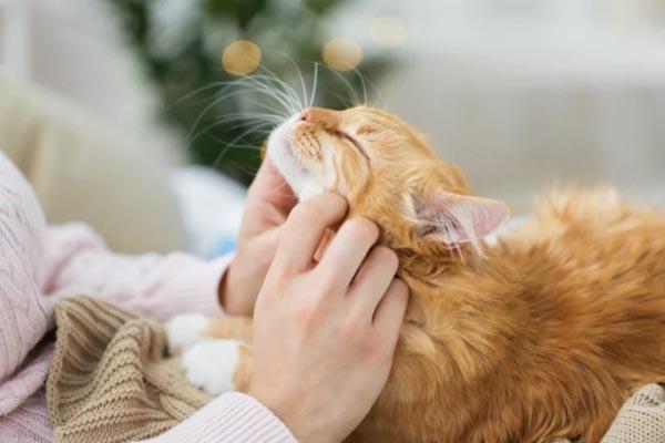 Любят ли кошки людей? Возможно даже больше, чем собаки