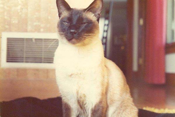В 1975 году этот кот стал соавтором научной статьи по физике