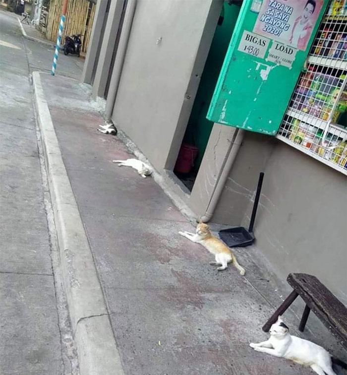 Кошки соблюдают социальную дистанцию