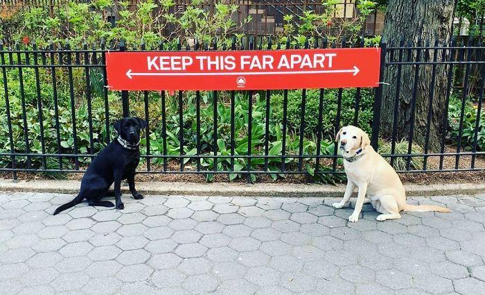 Собаки соблюдают социальную дистанцию