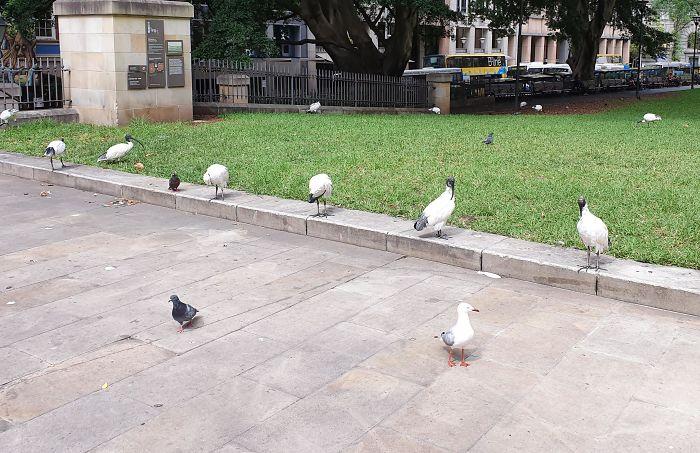 Чайки соблюдают социальную дистанцию