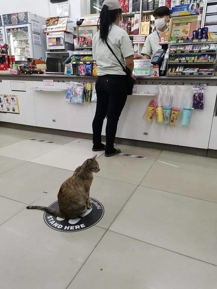 Кошка соблюдает социальную дистанцию