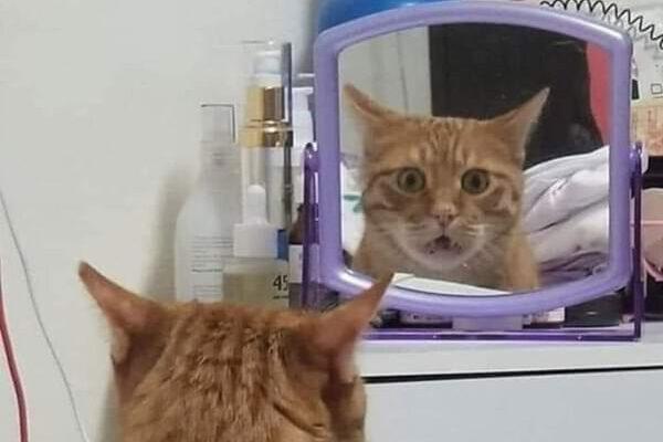 30 домашних животных, которые открыли для себя зеркало