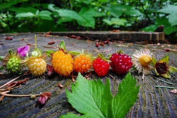 Фотографии жизненных циклов различных растений