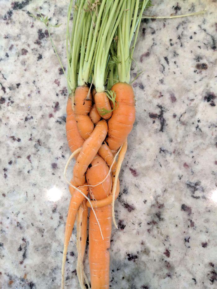 Что случается, когда плохо прореживают морковь