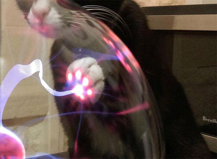 Что случается, когда кошка касается плазменного шара