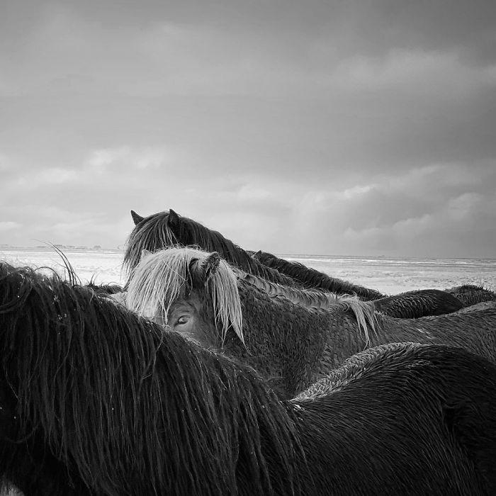 1-е место в категории «Животные». Фотограф Xiaojun Zhang