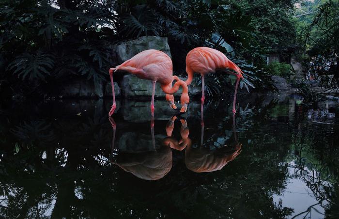 2-е место в категории «Животные». Фотограф Ji Li
