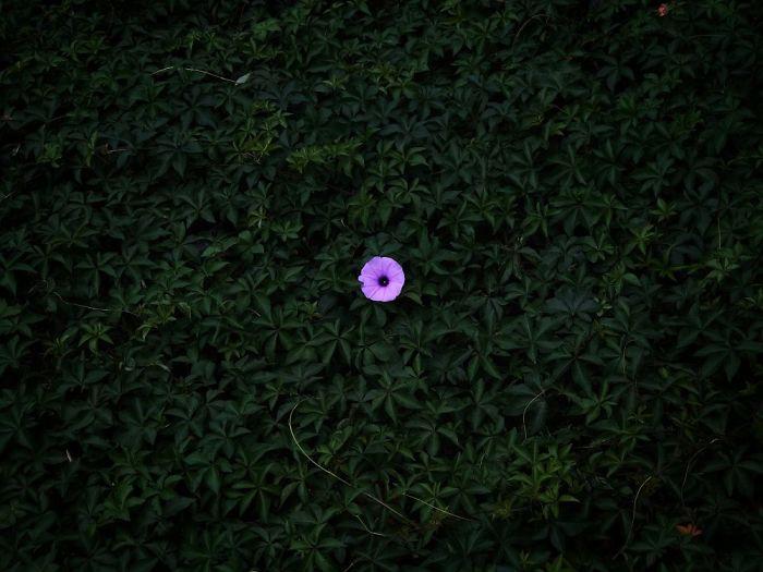 1-е место в категории «Цветы». Фотограф Peiquan Li