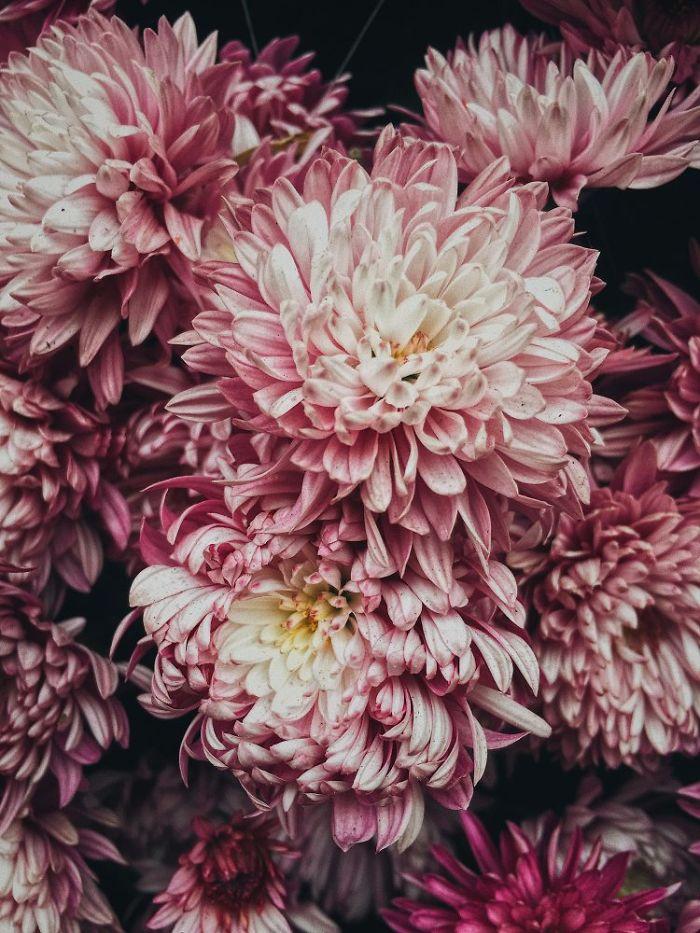 2-е место в категории «Цветы». Фотограф Chikeung Poon
