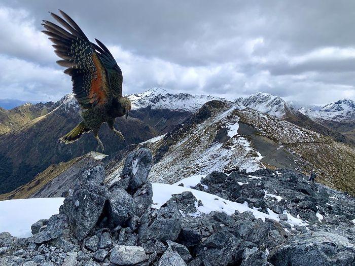 2-е место в категории «Природа». Фотограф Avishai Futerman