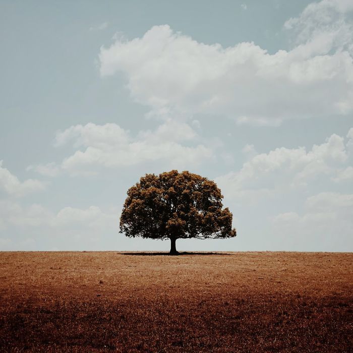 1-е место в категории «Деревья». Фотограф Glenn Homann