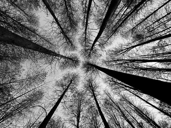 2-е место в категории «Деревья». Фотограф Wei Xiong