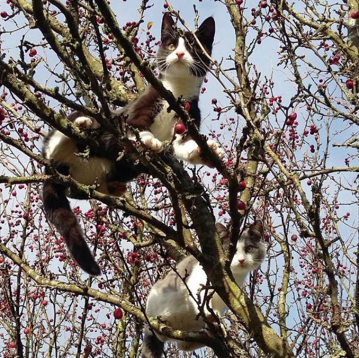 Птицы, которые выглядят как кошки
