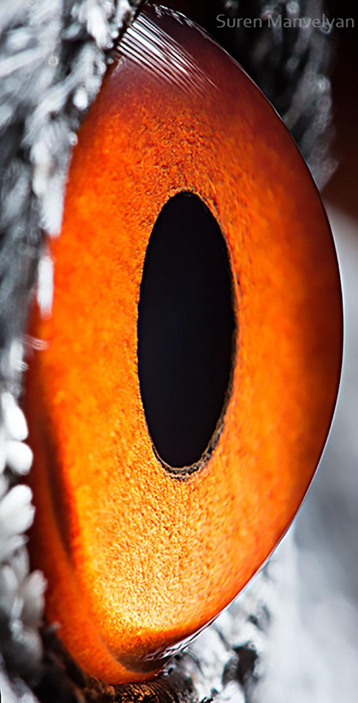 Глаз журавля