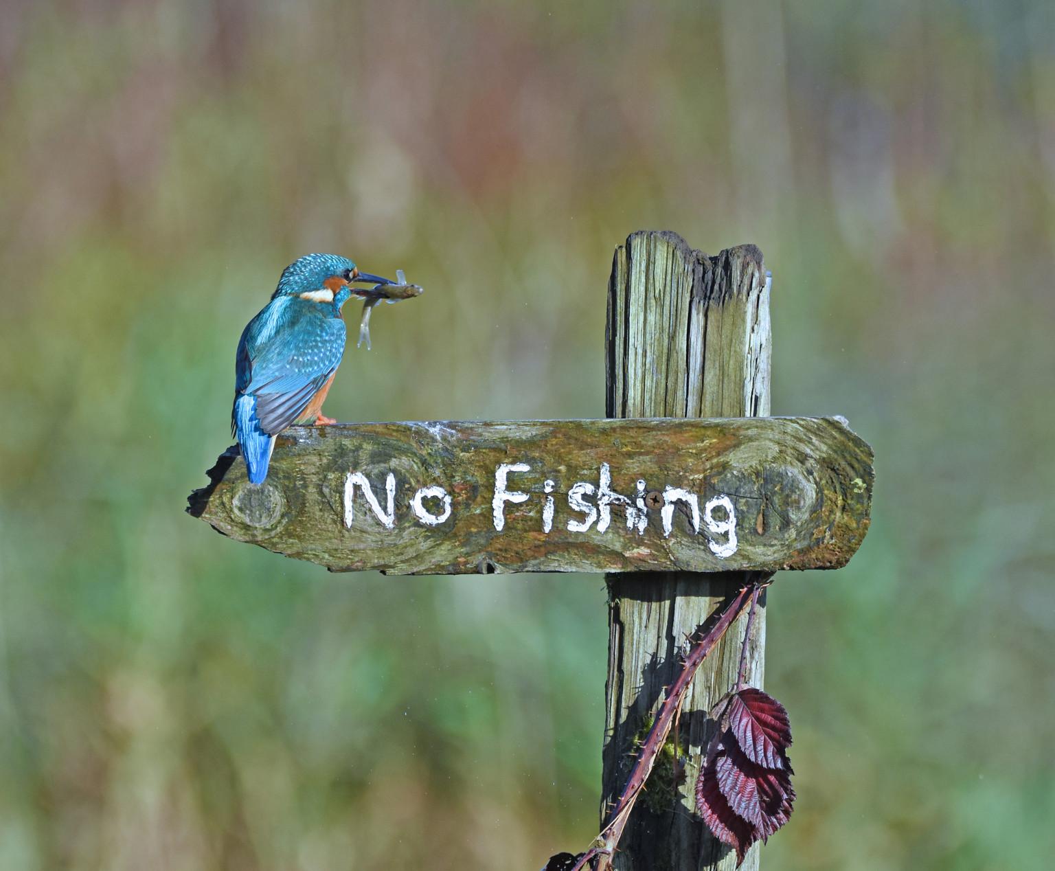 «Это птица-пересмешник». Фотограф Sally Lloyd Jones