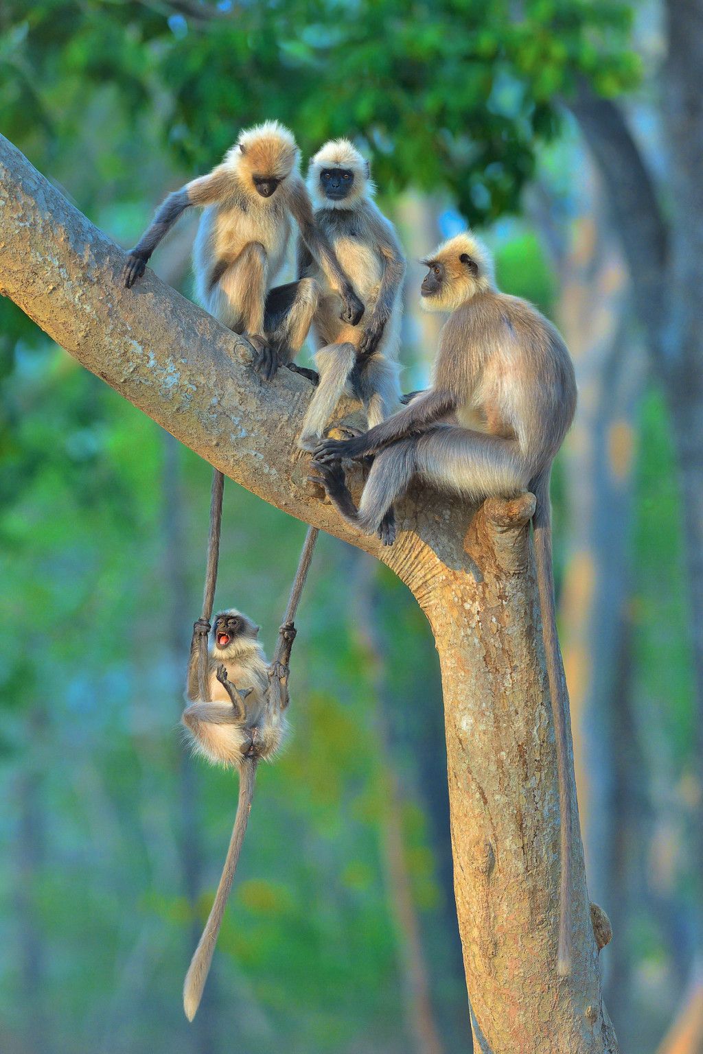 «Развлечения для всех возрастов». Фотограф Thomas Vijayan