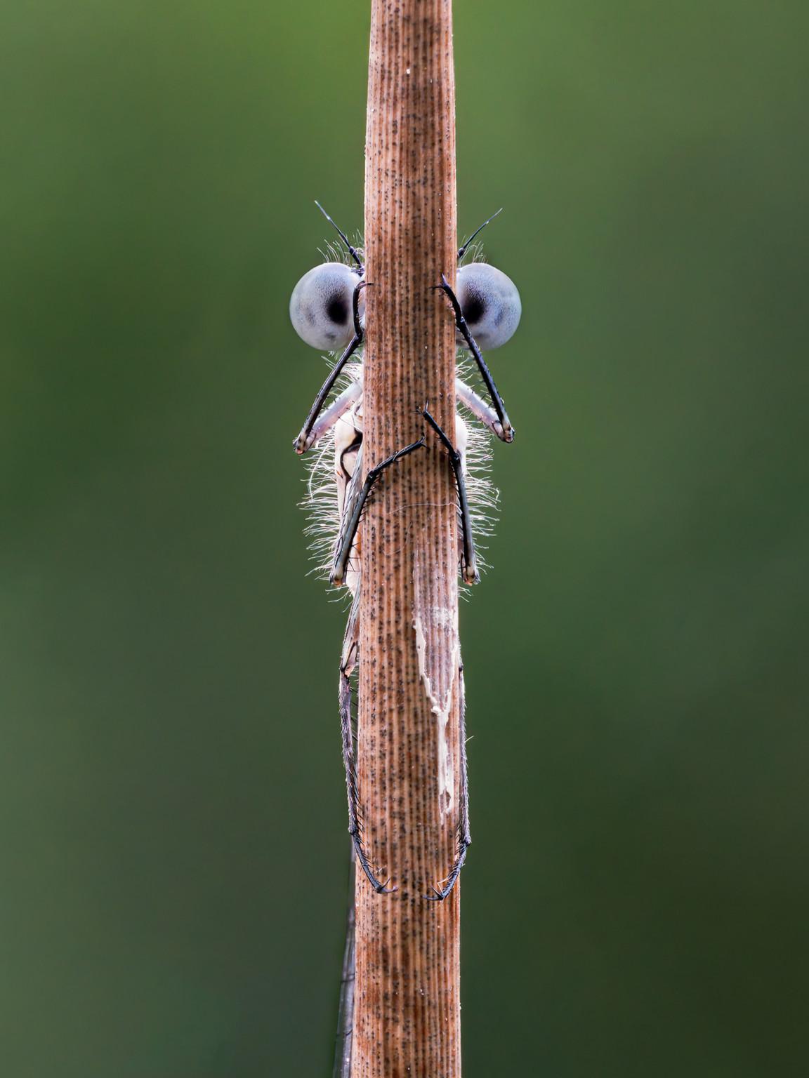 «Прятки». Фотограф Tim Hearn